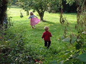 around around the garden