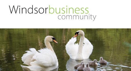 windsor business community networking events