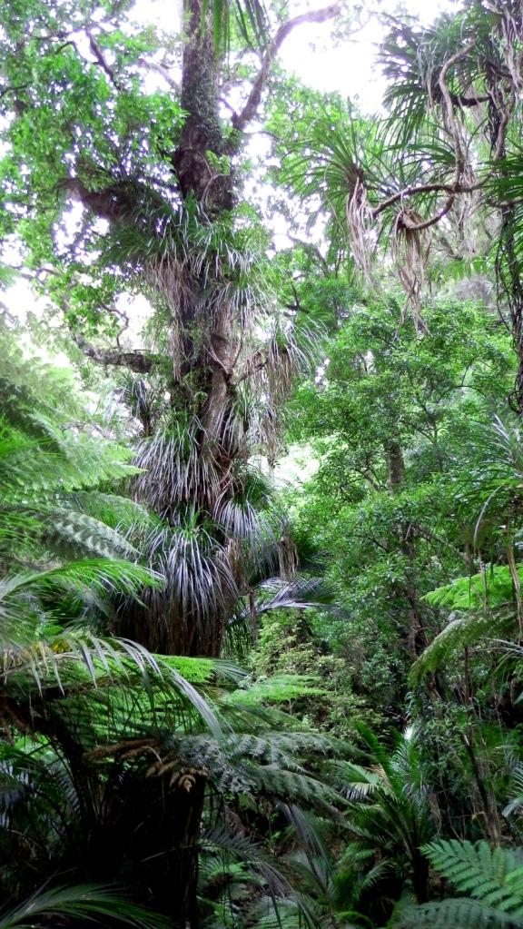abel tasman jungle