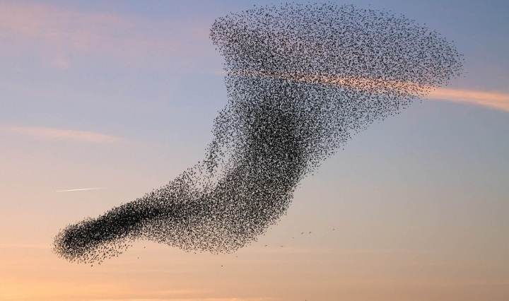 flock-of-flying-birds-desktop-wallpaper