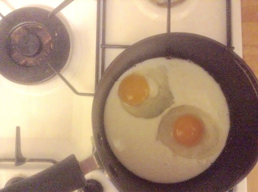 which came first the chicken or the egg