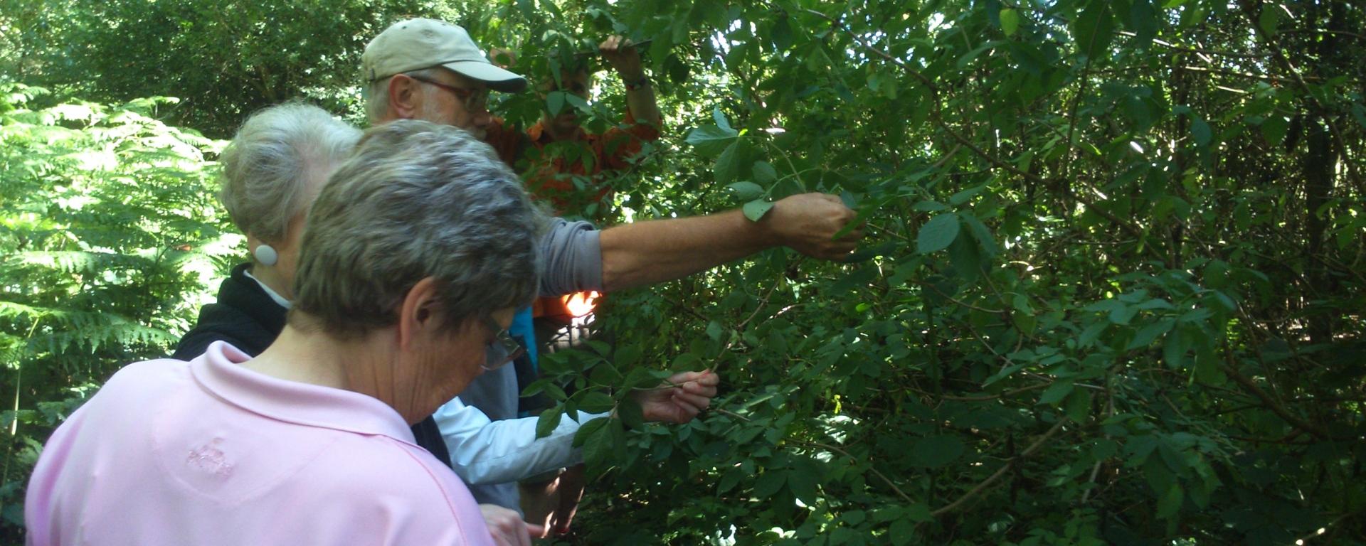 David Willis dot info bushcraft woodland walk group participation