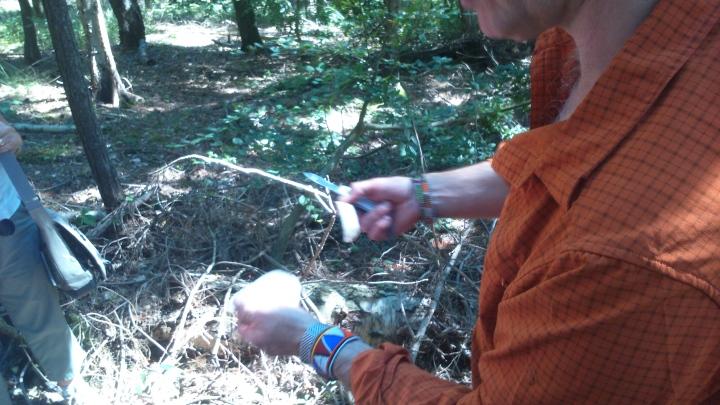 David Willis dot info bushcraft woodland walk making plasters