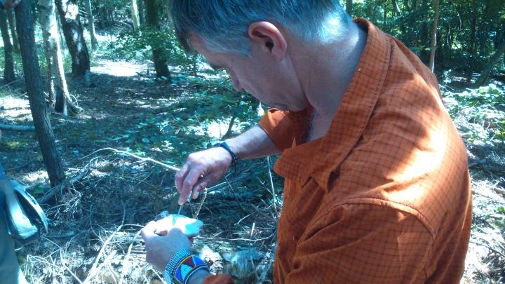 David Willis dot info bushcraft woodland walk not for eating but medical