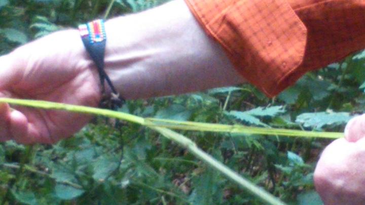 David Willis dot info bushcraft woodland walk peeling nettles