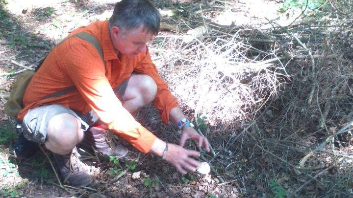 David Willis dot info bushcraft woodland walk showing how it will grow