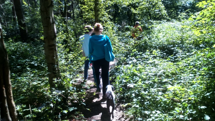 David Willis dot info bushcraft woodland walk small dogs welcome