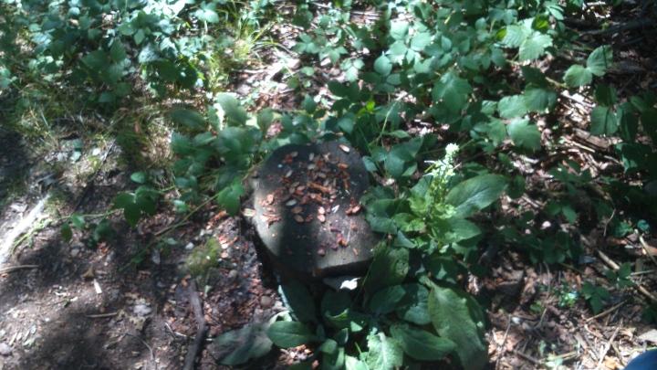 David Willis dot info bushcraft woodland walk squirrels at work
