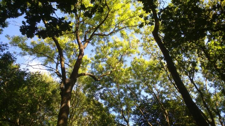 David Willis dot info bushcraft woodland walk the canopy