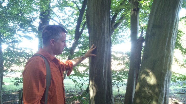 David Willis dot info bushcraft woodland walk this is groovy