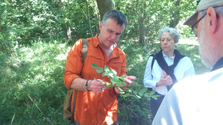 David Willis dot info bushcraft woodland walk what is this before me